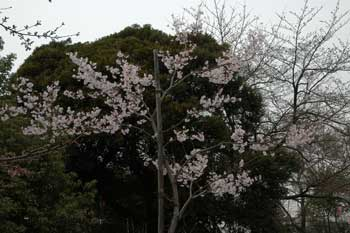 asukayama4.jpg